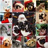 Things i ♥ Thursdays - 02. Cute Christmas Pets