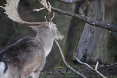 DSC00456 (Sarah Bailey) Tags: park dyrham 170110