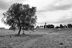 Paesaggio storico (Angelo Casteltrione (Aka alterdimaggio1957)) Tags: bw campania paestum rovine scavi