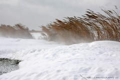 Wind,snow and ice... (Nells Photography) Tags: ice thenetherlands driftingice kruiendijs