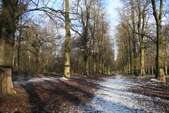 IMG_4567 (freestones999) Tags: nationaltrust nottinghamshire clumberpark