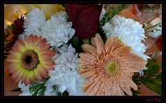 Flowers of Madeira (susodediego ) Tags: portugal bouquet ramo madeira borderfx ilustrarportugal leicadlux4 flowersdamadeira