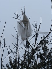 ANOTHER ANGEL (A sonnet) (Chandra Siri) Tags: winter angel season grey visions spring poetry poem dream vision angels dazedandconfused visualpoetry visualart sonnet astory adream theworldthroughmyeyes angelet aboveus poetryandpicturesinternational iambicpentameter articulateimages comefromlandandsea poemspixelsprose northwindsdaugther