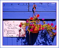LA BELLE VIE....... (nanettesol) Tags: door flowers light summer luz fruits puerta shadows verano provence jugos sombras lavanda maceta provenzal