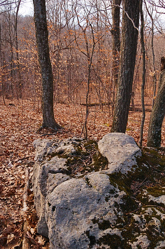 Forest and rock, at Engelmann Woods Natural Area, in Saint Albans, Missouri, USA
