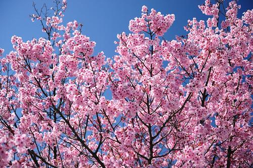 2010-03-27_1076_2_D700