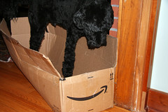 Skippy's Amazon box 084