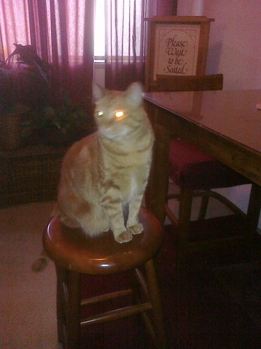 Ptw From his dining room stool Leki watches over the room ready to strike with his laser eyes