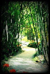 bamboo stand path/Huntington Library