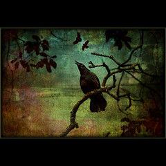 nevermore IV . . . (dragonflydreams88) Tags: theworldwelivein memoriesbook awardtree artistictreasurechest magicunicornverybest selectbestfavorites magicunicornmasterpiece exoticimage