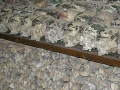 100414_Hallstatt 099 (Tauralbus) Tags: friedhof cemetery skull austria österreich oberösterreich weltkulturerbe hallstatt upperaustria schädel beinhaus totenkult totenschädel unescoweltkulturerbe