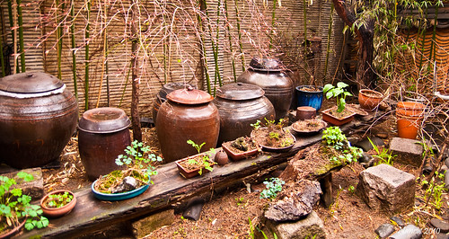 Happy Earth Day --Saving the earth one garden at a time-- Restaurant Garden -- Insadong Seoul