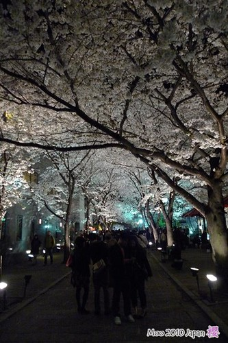 白川祇園-夜櫻2