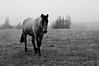 silence (Dave_B_) Tags: chile horse patagonia mist cold southamerica grass animals fauna delete9 delete5 delete2 delete6 delete7 save3 delete8 delete3 save7 save8 delete delete4 save save2 save9 save4 sur save5 save10 save6 aysen surdelmundo savedbythehotboxuncensoredgroup