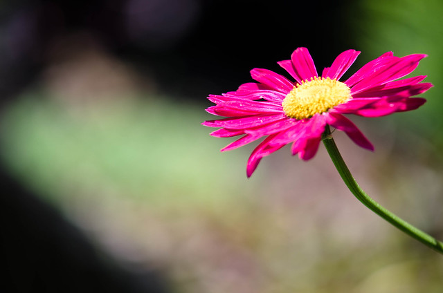flower with bokeh background