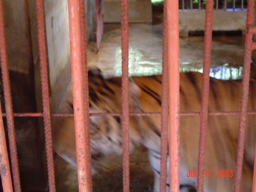 ThailandCambodia 229