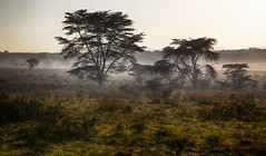 Morning Mood (AnyMotion) Tags: landscape landschaft trees bäume dust staub nature natur wildlife morninglight morgenlicht 2011 lakenakurunationalpark kenya kenia africa afrika anymotion reisen travel 5d2 canoneos5dmarkii ngc npc