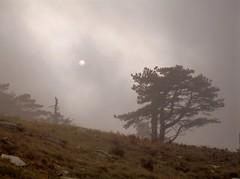 (Otrebor66) Tags: alberi landscape italia liguria olympus nebbia sp320 the4elements