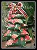 Pinheirinho de mesa (ROTA da Arte) Tags: natal patchworkpicnik