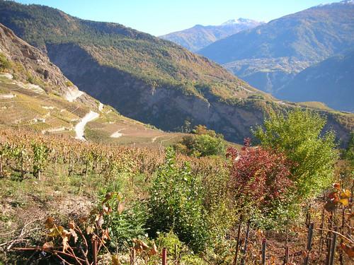 Das Ithaka-Projekt - Mythopia Weingut im Wallis
