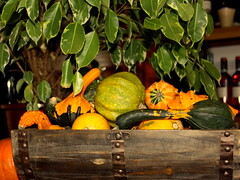 autumn colors in a wooden crate (oriana.italy) Tags: autumn nature closeup composition c pumpkins s ficus sb woodencrate img0075 impressedbeauty crystalaward shieldofexcellencesoe cherryontopphotography orianaitaly damniwishidtakenit