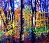 The real Forest.... (Tobi_2008) Tags: autumn trees color detail nature alberi forest germany deutschland searchthebest saxony herbst natur arbres sachsen tobi wald farbe bäume allemagne soe germania naturesfinest supershot bej abigfave diamondclassphotographer flickrdiamond