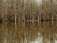 Roanoke River reflections (bdaryle) Tags: trees fall nature reflections river sony northcarolina symmetry barren roanokeriver brandondaryle bdaryle imagesbybrandon