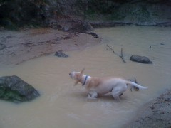 Dog in the Creek