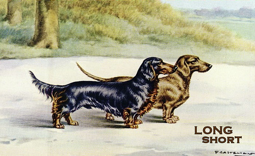 1960s doxies