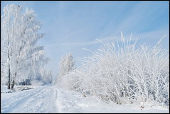 17 (Bargais) Tags: winter white snow latvia latvija kuldiga sniegs ziema kuldīga balts