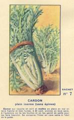 legume7 cardon