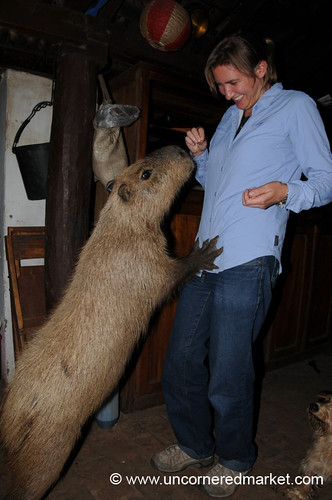 A Capybara named Mimi with Audrey outside Concepcion, Paraguay