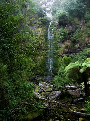 Erskine Falls during heavy rain, Great Otway National Park (Skeggsy) Tags: nature waterfall rainforest lorne erskinefalls greatotwaynationalpark