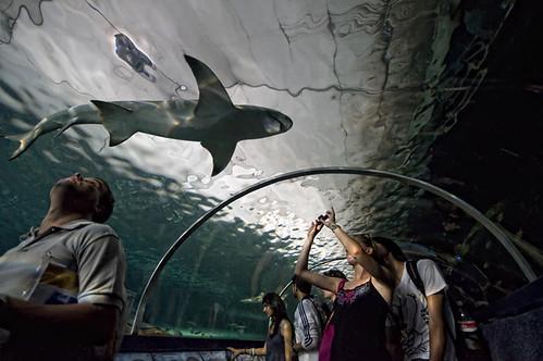shark attack por Eleni.Rim.