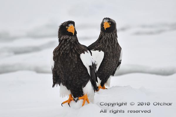 Eagle Heart