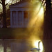Cincinnati - Spring Grove Cemetery & Arboretum Warm Light On Swan
