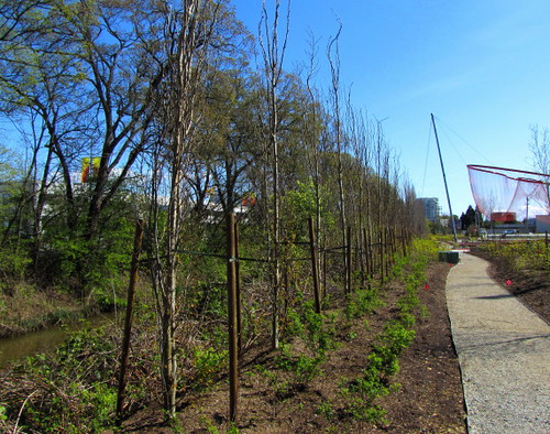 Trees planted at the Richmond Olympic Oval
