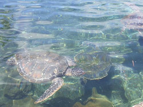 Satoalepai, Savai'i - Turtle Conservation
