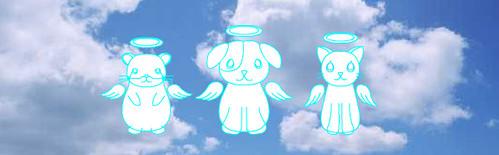 ペット火葬・ペット葬儀【ジャパンペットセレモニー】 - Windows Internet Explorer 08.06.2011 211408