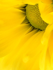 Yellow is the colour... (Charles Smallman) Tags: flowers portrait people glass speed reflections nikon holidays vespa sheep artistic cuba churches charles stainedglass isleofwight solent cowes windsurfer cowesweek kitesurfers ryde scooterrally smallman appley nikon300 nikon700 charlessmallman vacationsscooters charlessmallmansportfoliojanuary