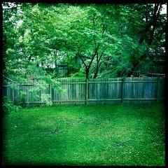 Belle Crest Backyard (Detail) by Jason Willis