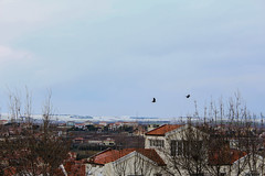 TEPEKENT (murathanduran1) Tags: tepekent büyükçekmece istanbul türkiye turkey fotoğraf photo hill tepe kar snow