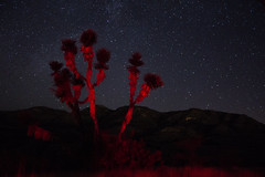 (Jos Monreal) Tags: star stars starsphoto starsphotography starry starrynight joshuatree tree night nightphoto nightphotography nightpics nature aguascalientes aguascalientesfotos mexico canont3i canon canonphotographer canonglobal canonphoto canonmexicana canonphotography specland longexposureshots longexposure longexposurephotography longexpo milkyway milkywaychasers astro astrophoto astrophotography