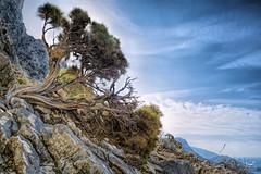 Cedar (Bram de Jong) Tags: cedar tree greece travel landscape sky nikon mountain plant kalymnos 845filter ngc