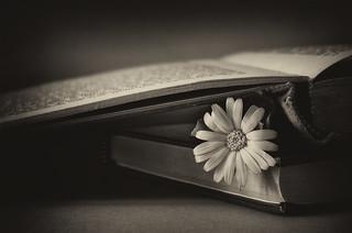 Dos libros y una flor