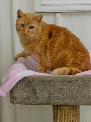 Angie - 9 year old spayed female