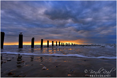 Sunrise Surfside Beach - 14mm Nikon 2.8 Lens (Brenda Read Photography) Tags: bridge sunset sky shells bird beach water lines birds clouds sunrise pier nikon waves texas photographer tx seagull curves salt playa waterway intercoastal lakejackson relections surfside d300 14mm clute 77541 brendaread