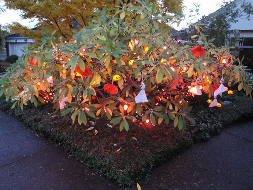 Halloween Edgeworthia whole
