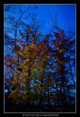 **THE COLORS OF FALL** (~*THAT KID RICH*~) Tags: blue trees winter sky orange fall nature colors beauty yellow canon river death flickr rich explore bark leafs frontpage urbex tkr naturesbeauty zoeller thatkidrich tkrphotography richzoeller