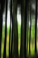 Trees pan (David Barker Photographic) Tags: pictures uk trees david blur woodland landscape photography arty photos photographic lancashire preston pan barker beacon fell